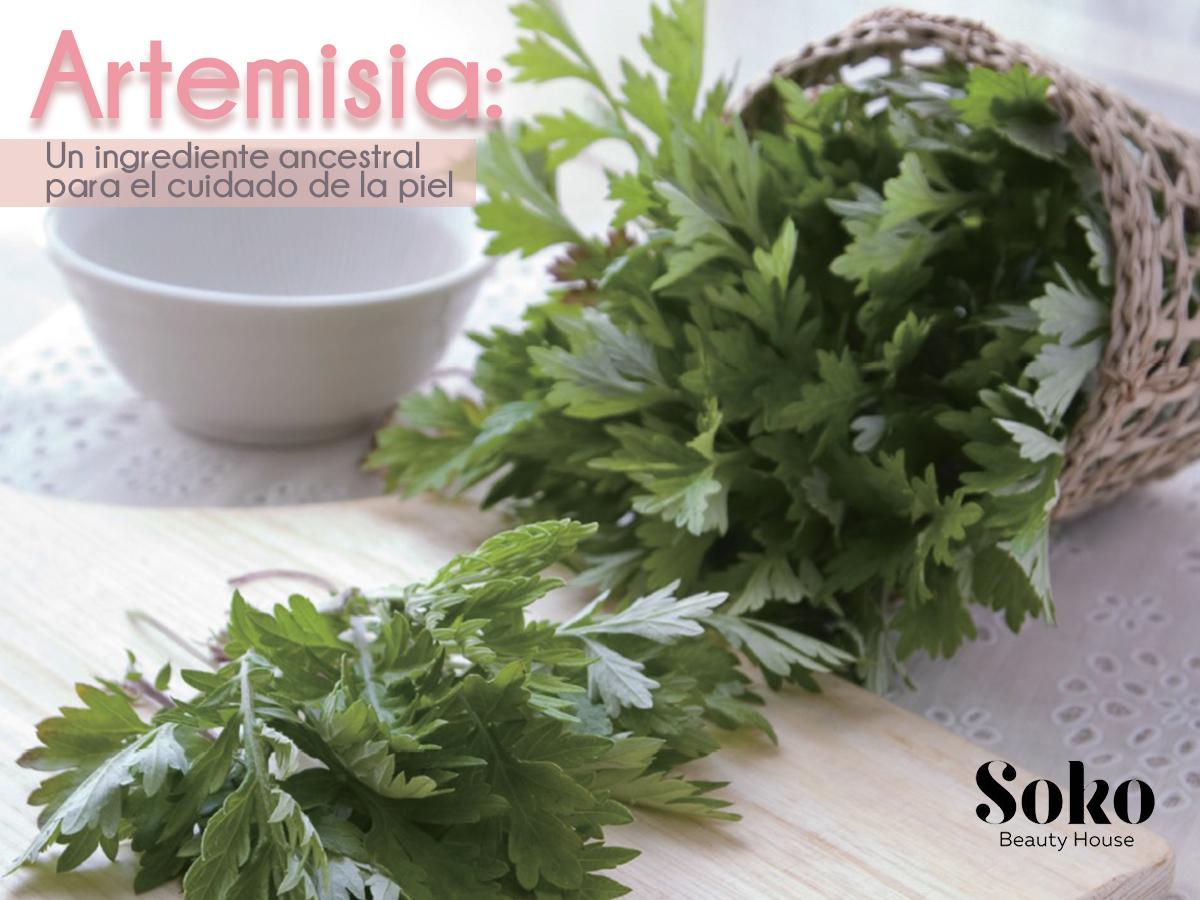 blog-sokobeautyhouse-artemisia